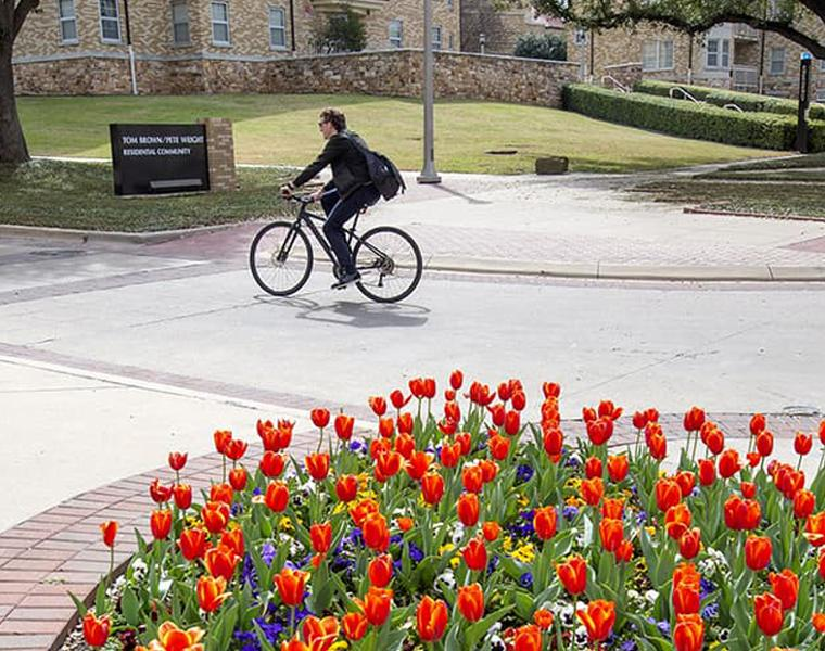 Faculty riding a bike near tulips on campus