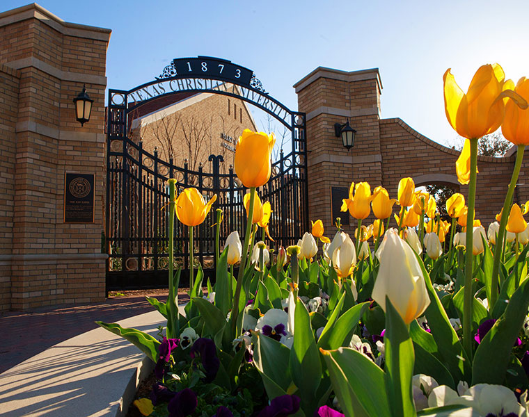 Spring tulips just outside the entrance gates near TCU Admission Center