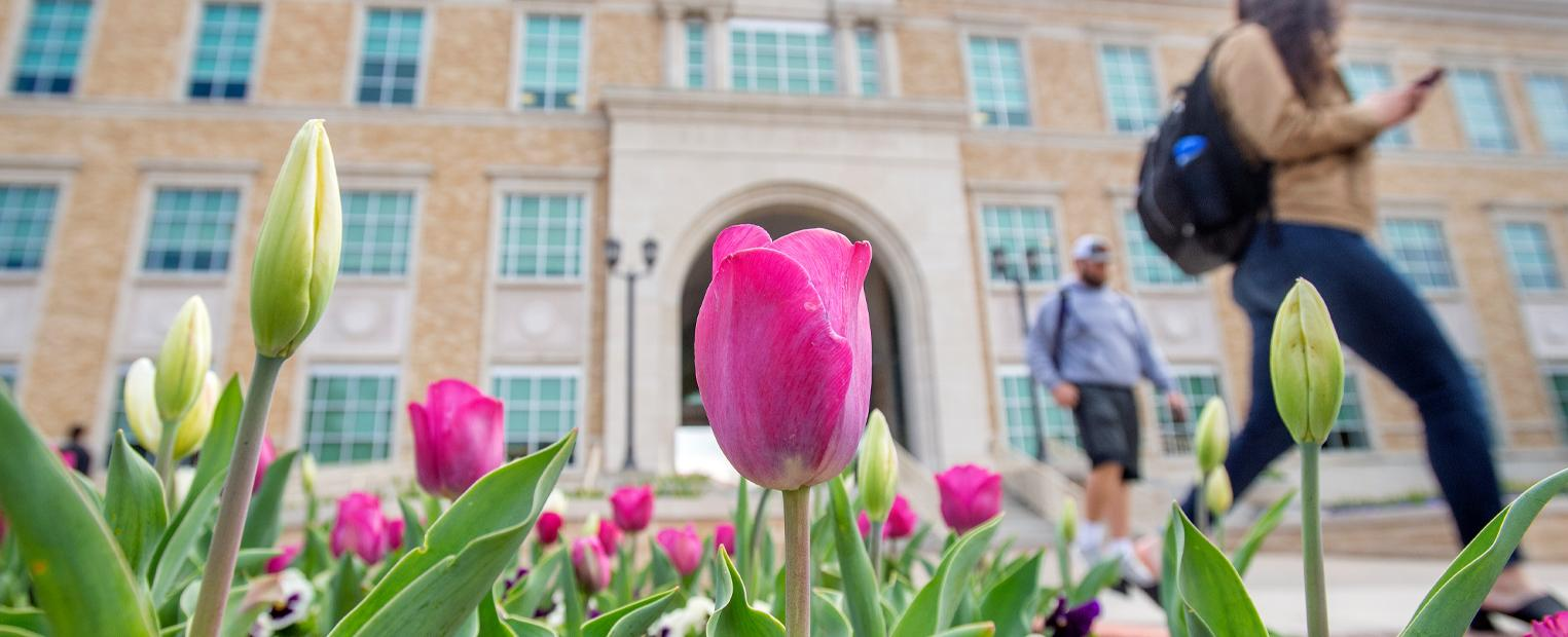 Students walking by tulips